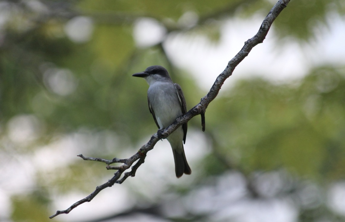 A Homeowner's Guide to Common Backyard Birds in New York